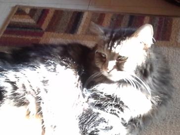 kitty-in-sun