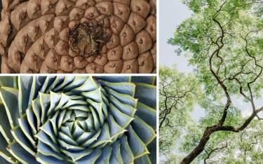 fractal-plants